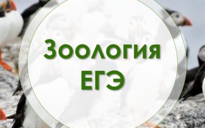 Экспресс-Зоология
