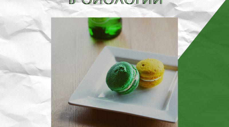 Печень и желчь